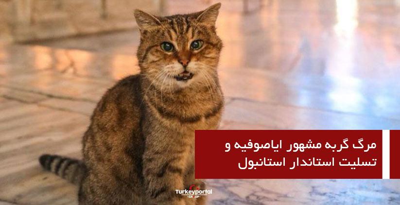 گربه مشهور ایاصوفیه